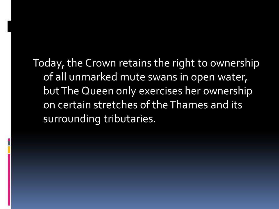 Today, the Crown retains the right to ownership of all unmarked mute swans in open water, but The Queen only exercises her ownership on certain stretches of the Thames and its surrounding tributaries.