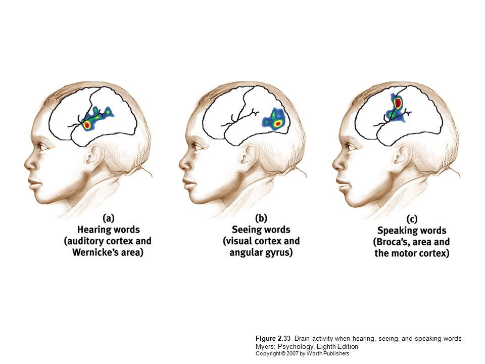 Figure 2.33 Brain activity when hearing, seeing, and speaking words Myers: Psychology, Eighth Edition Copyright © 2007 by Worth Publishers