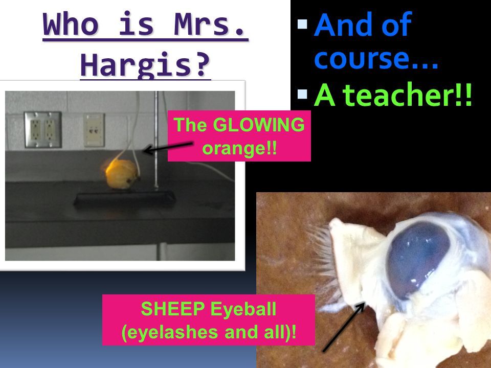  Tell Mrs.Hargis at least one day in advance and stay after for extra help.