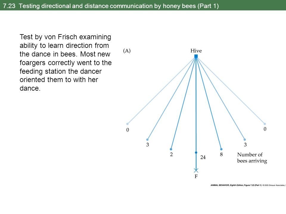 7.23 Testing directional and distance communication by honey bees (Part 1) Test by von Frisch examining ability to learn direction from the dance in bees.