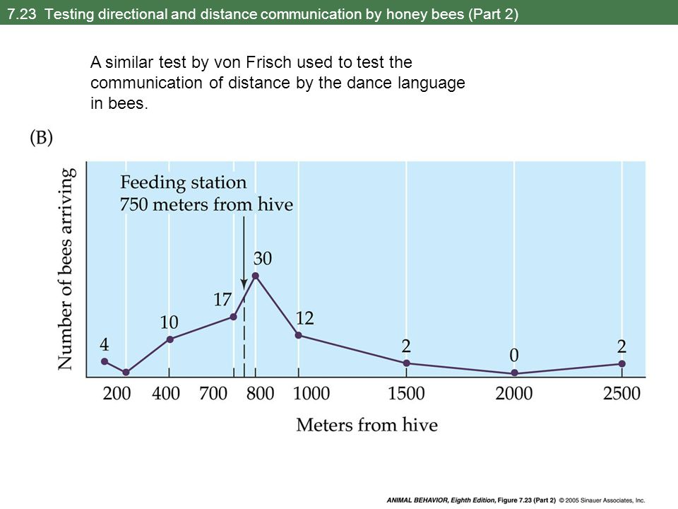 7.23 Testing directional and distance communication by honey bees (Part 2) A similar test by von Frisch used to test the communication of distance by the dance language in bees.