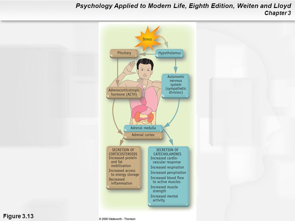 Psychology Applied to Modern Life, Eighth Edition, Weiten and Lloyd Chapter 3 Figure 3.13