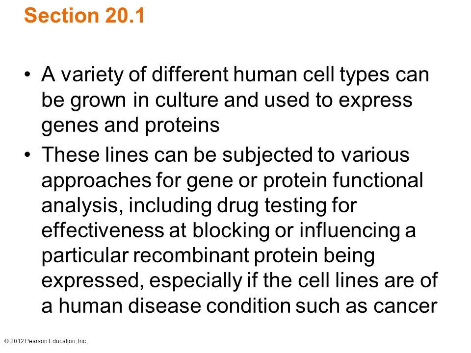 © 2012 Pearson Education, Inc. Section 20.1 A variety of different human cell types can be grown in culture and used to express genes and proteins The
