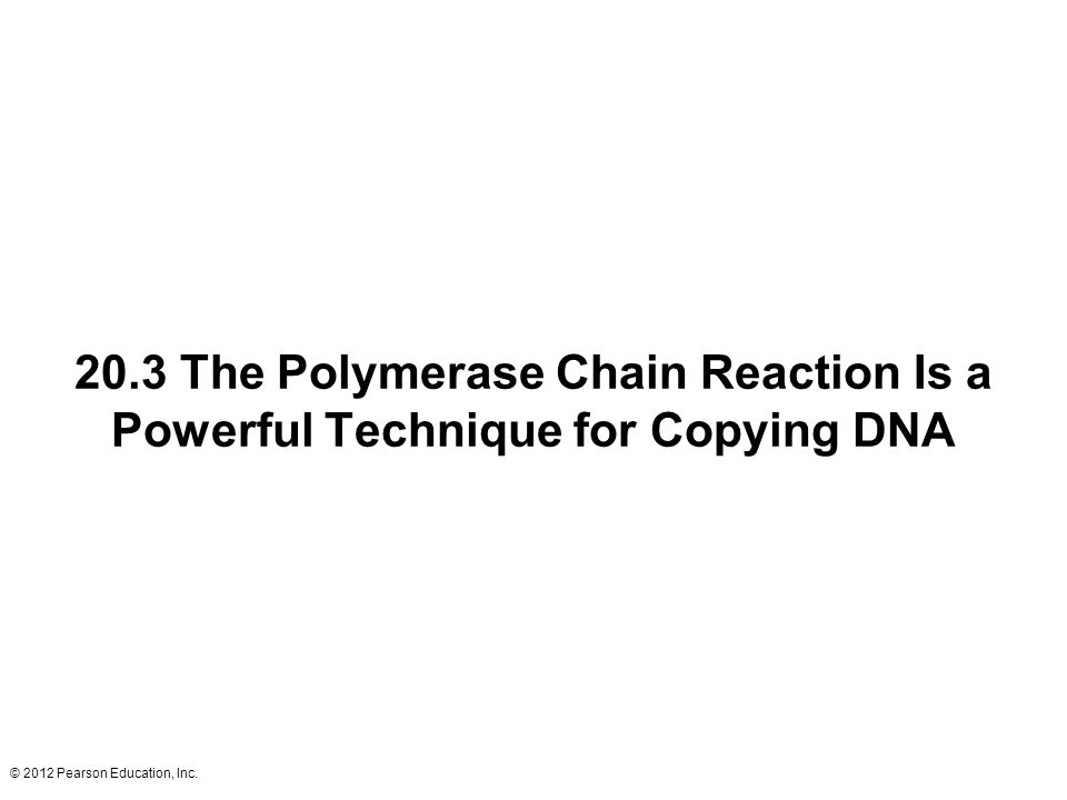 © 2012 Pearson Education, Inc. 20.3 The Polymerase Chain Reaction Is a Powerful Technique for Copying DNA