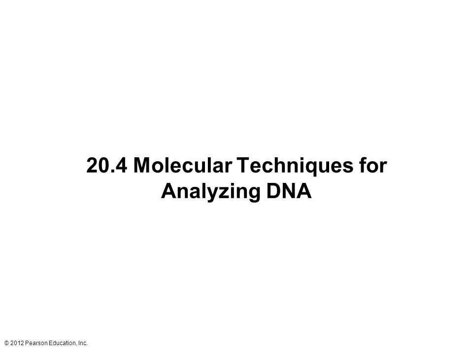 © 2012 Pearson Education, Inc. 20.4 Molecular Techniques for Analyzing DNA