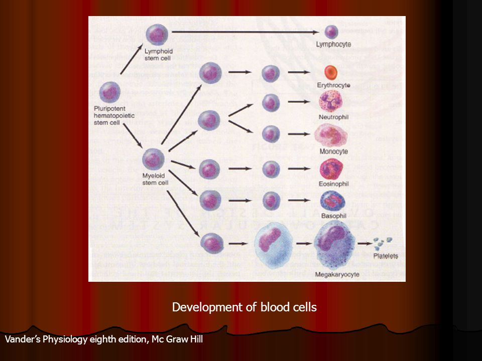 Vander's Physiology eighth edition, Mc Graw Hill Development of blood cells