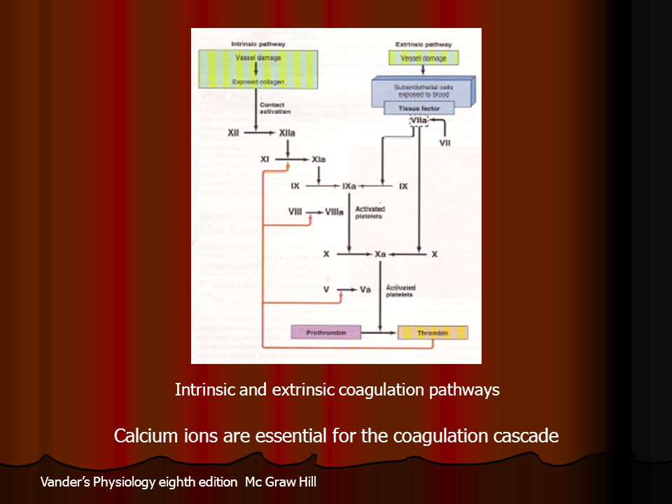 Intrinsic and extrinsic coagulation pathways Vander's Physiology eighth edition Mc Graw Hill Calcium ions are essential for the coagulation cascade