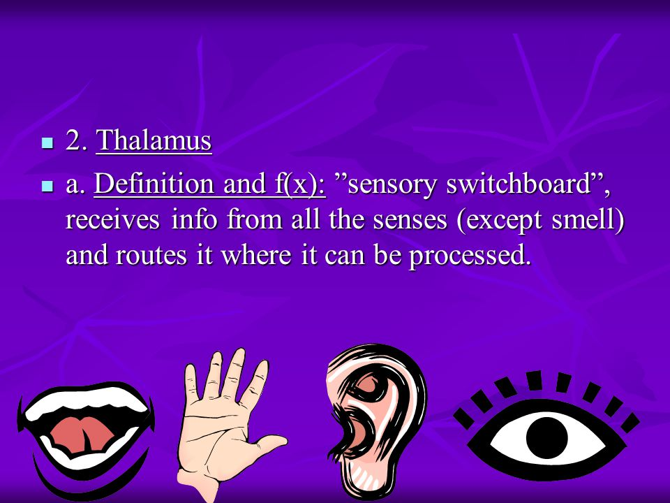 2. Thalamus 2. Thalamus a.
