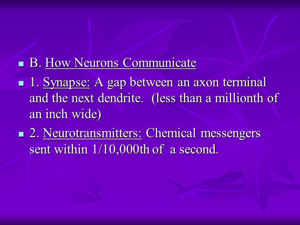 B. How Neurons Communicate B. How Neurons Communicate 1.