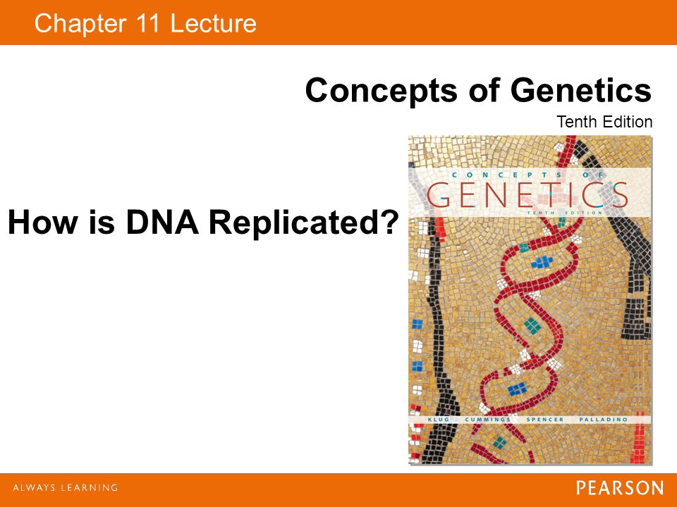 Chapter 11 Lecture Concepts of Genetics Tenth Edition How is DNA Replicated?