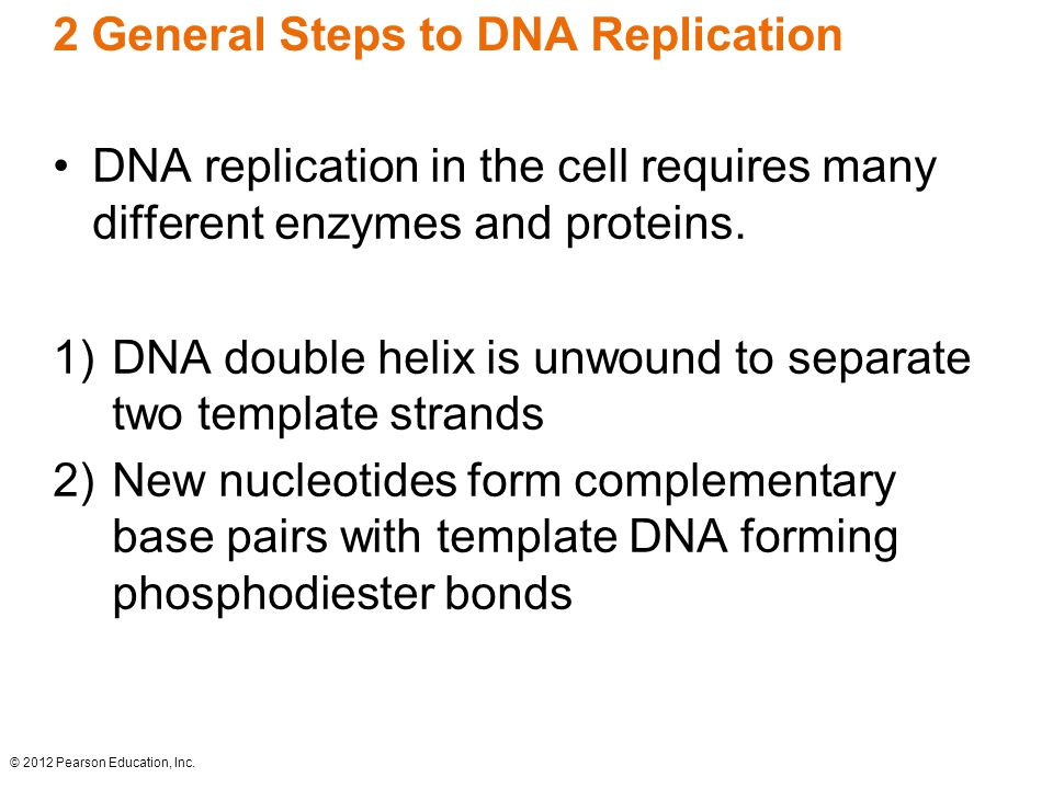 2 General Steps to DNA Replication DNA replication in the cell requires many different enzymes and proteins. 1)DNA double helix is unwound to separate