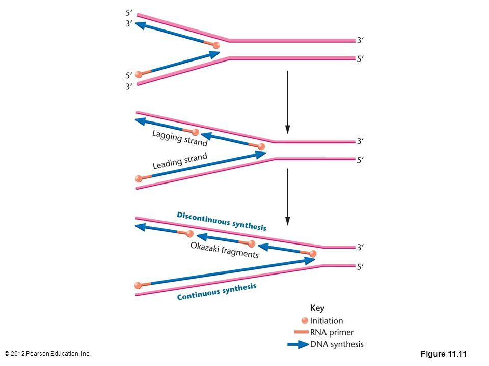 © 2012 Pearson Education, Inc. Figure 11.11