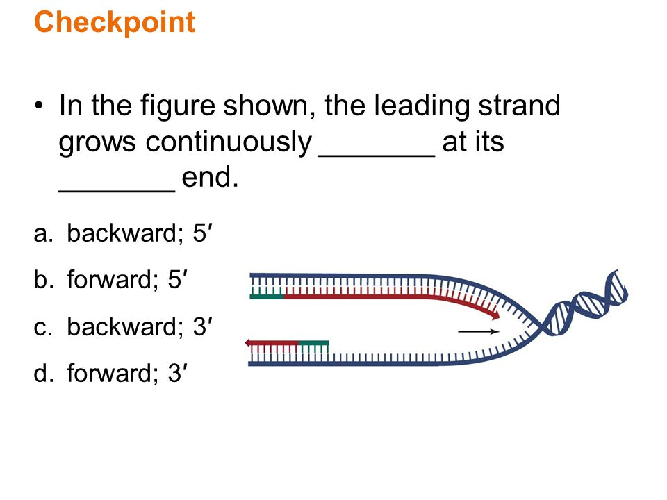 Checkpoint In the figure shown, the leading strand grows continuously _______ at its _______ end. a.backward; 5′ b.forward; 5′ c.backward; 3′ d.forwar