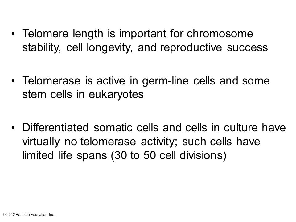 © 2012 Pearson Education, Inc. Telomere length is important for chromosome stability, cell longevity, and reproductive success Telomerase is active in