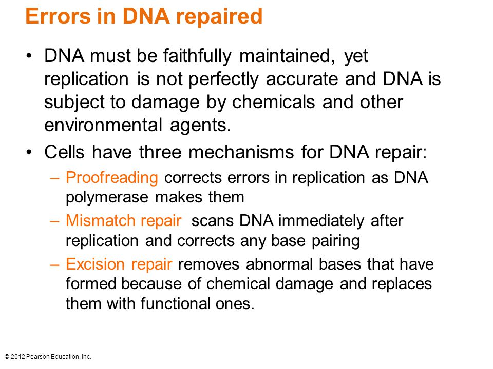 Errors in DNA repaired DNA must be faithfully maintained, yet replication is not perfectly accurate and DNA is subject to damage by chemicals and othe