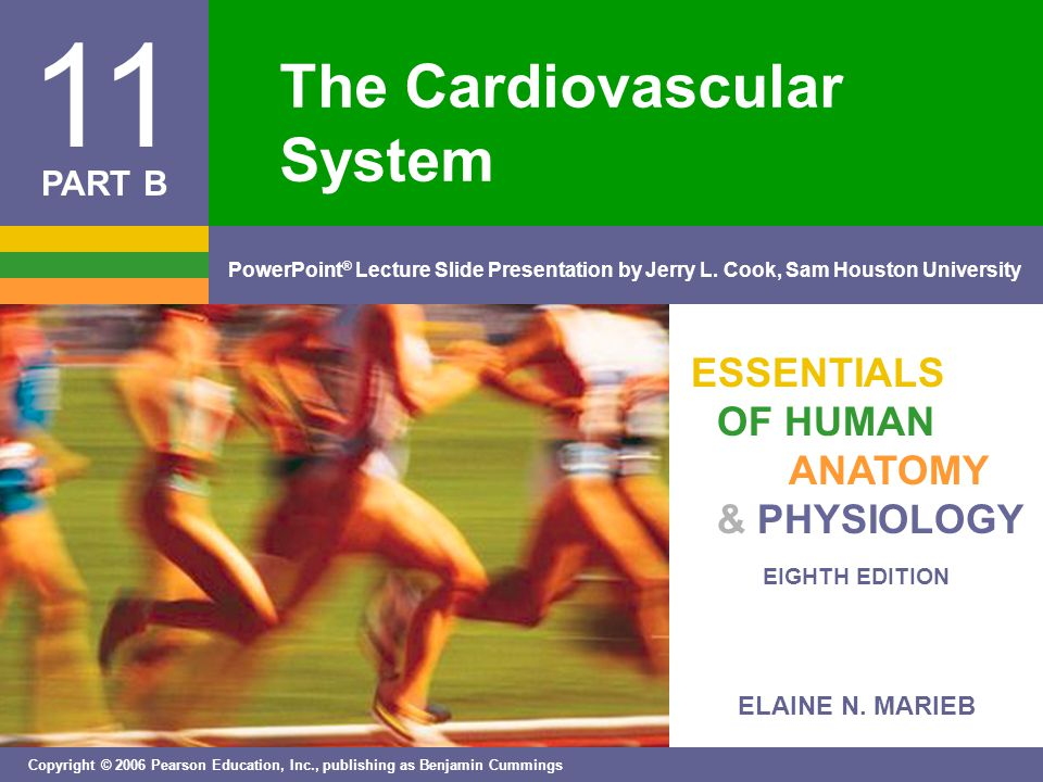 Copyright © 2006 Pearson Education, Inc., publishing as Benjamin Cummings The Heart: Regulation of Heart Rate  Stroke volume usually remains relatively constant  Starling's law of the heart – the more that the cardiac muscle is stretched, the stronger the contraction  Changing heart rate is the most common way to change cardiac output