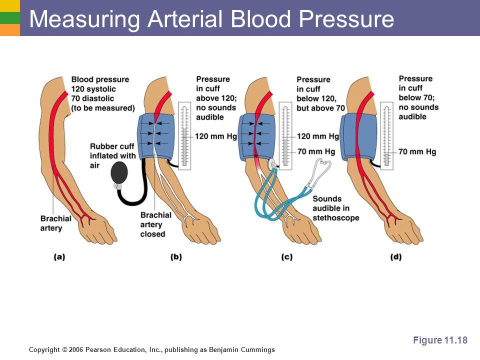 Copyright © 2006 Pearson Education, Inc., publishing as Benjamin Cummings Measuring Arterial Blood Pressure Figure 11.18