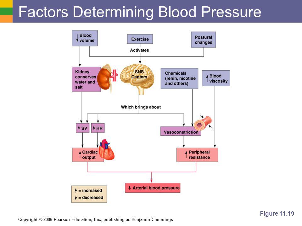 Copyright © 2006 Pearson Education, Inc., publishing as Benjamin Cummings Factors Determining Blood Pressure Figure 11.19