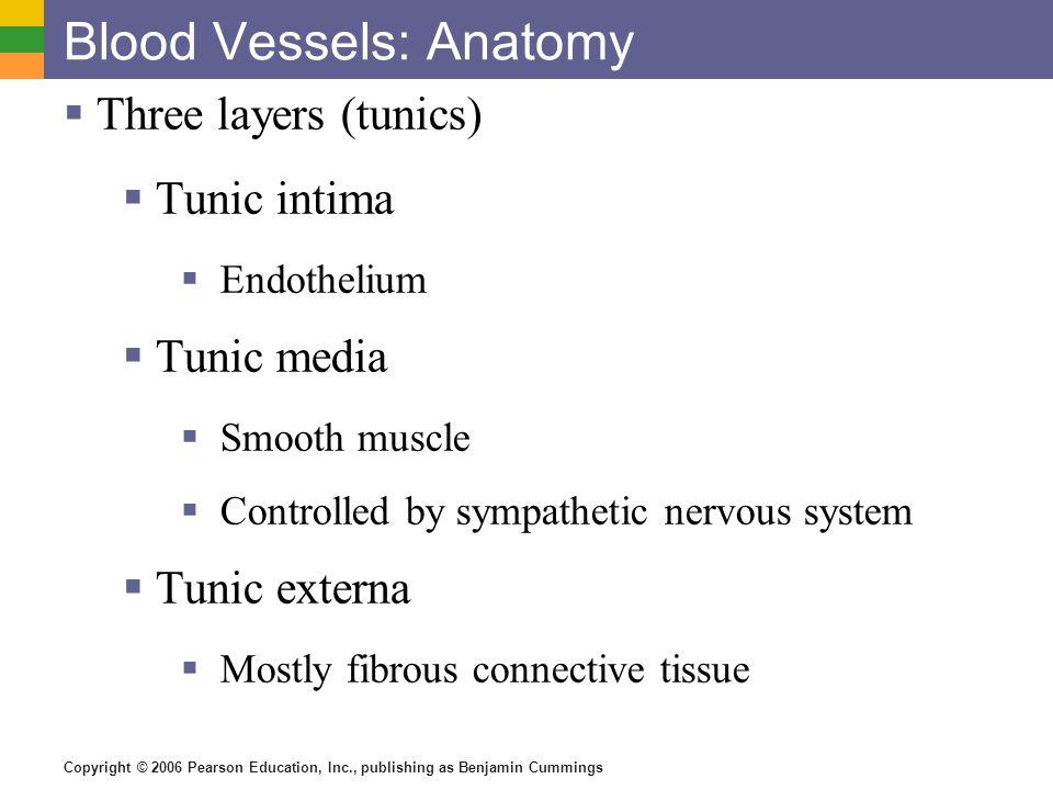 Copyright © 2006 Pearson Education, Inc., publishing as Benjamin Cummings Blood Vessels: Anatomy  Three layers (tunics)  Tunic intima  Endothelium