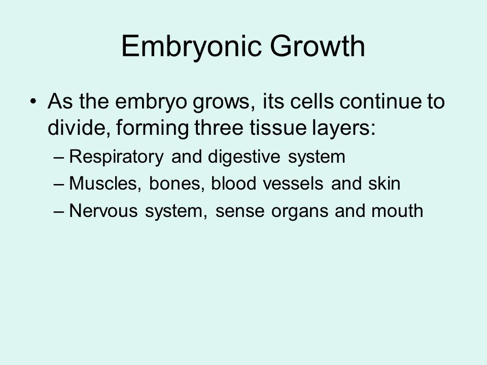 Embryonic Growth As the embryo grows, its cells continue to divide, forming three tissue layers: –Respiratory and digestive system –Muscles, bones, blood vessels and skin –Nervous system, sense organs and mouth