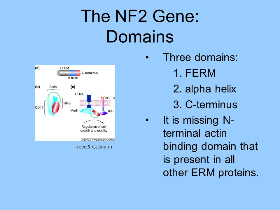 Conformations of NF2 closed vs.