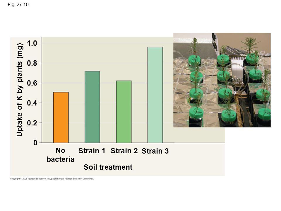 Fig. 27-19 No bacteria Strain 1Strain 2 Strain 3 Soil treatment Uptake of K by plants (mg) 0 0.2 0.4 0.6 0.8 1.0