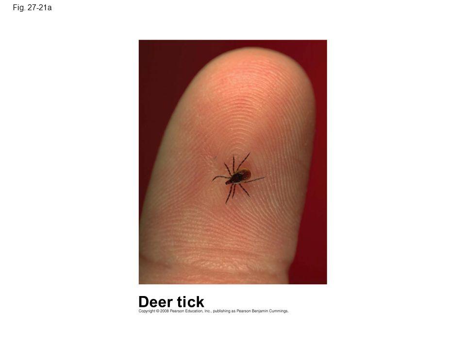 Fig. 27-21a Deer tick