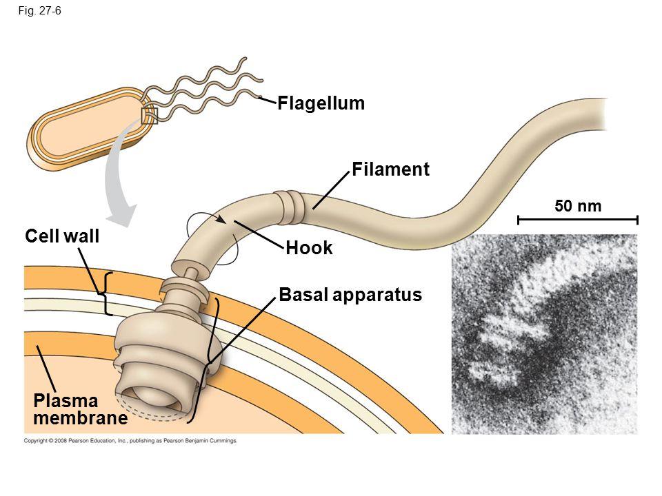 Fig. 27-6 Flagellum Filament Hook Basal apparatus Cell wall Plasma membrane 50 nm