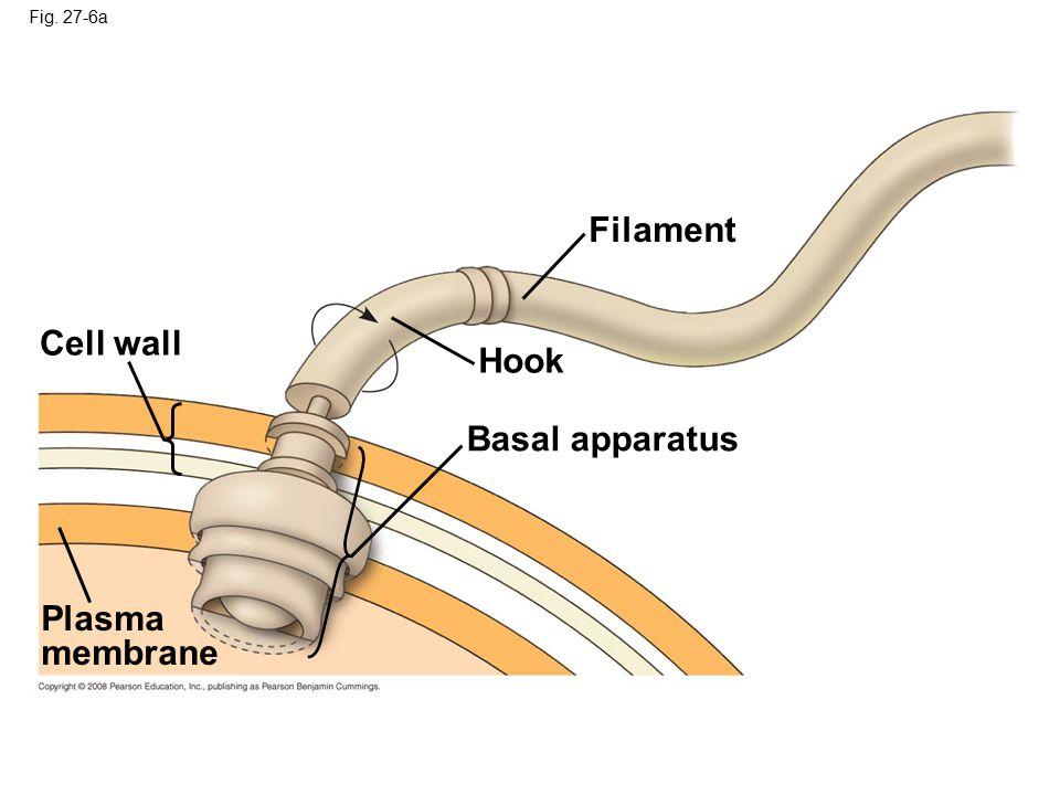 Fig. 27-6a Cell wall Filament Hook Basal apparatus Plasma membrane
