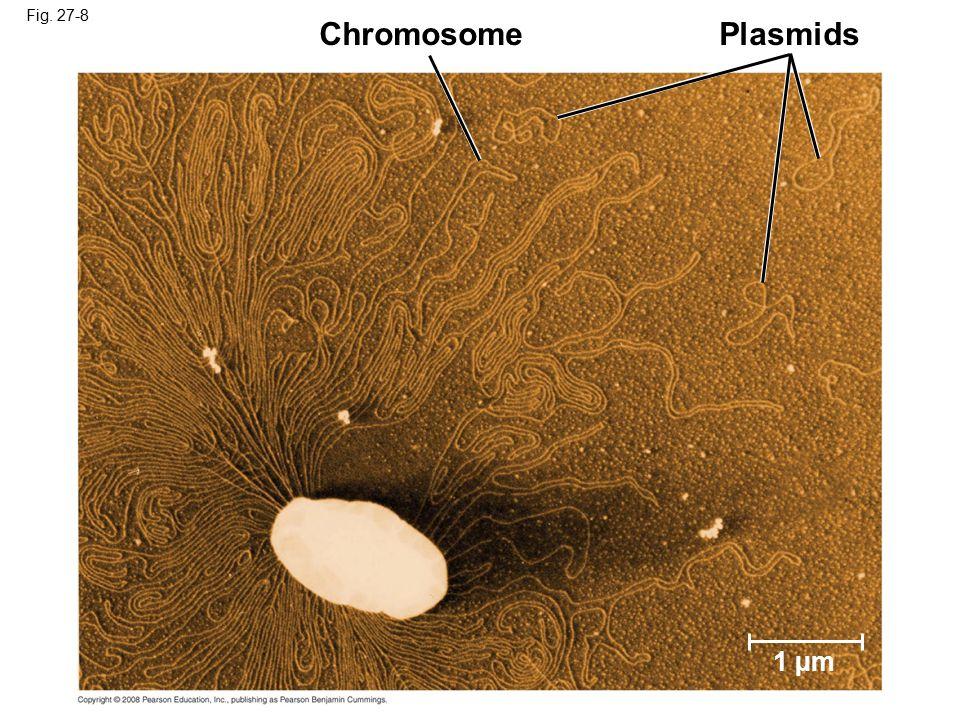 Fig. 27-8 ChromosomePlasmids 1 µm
