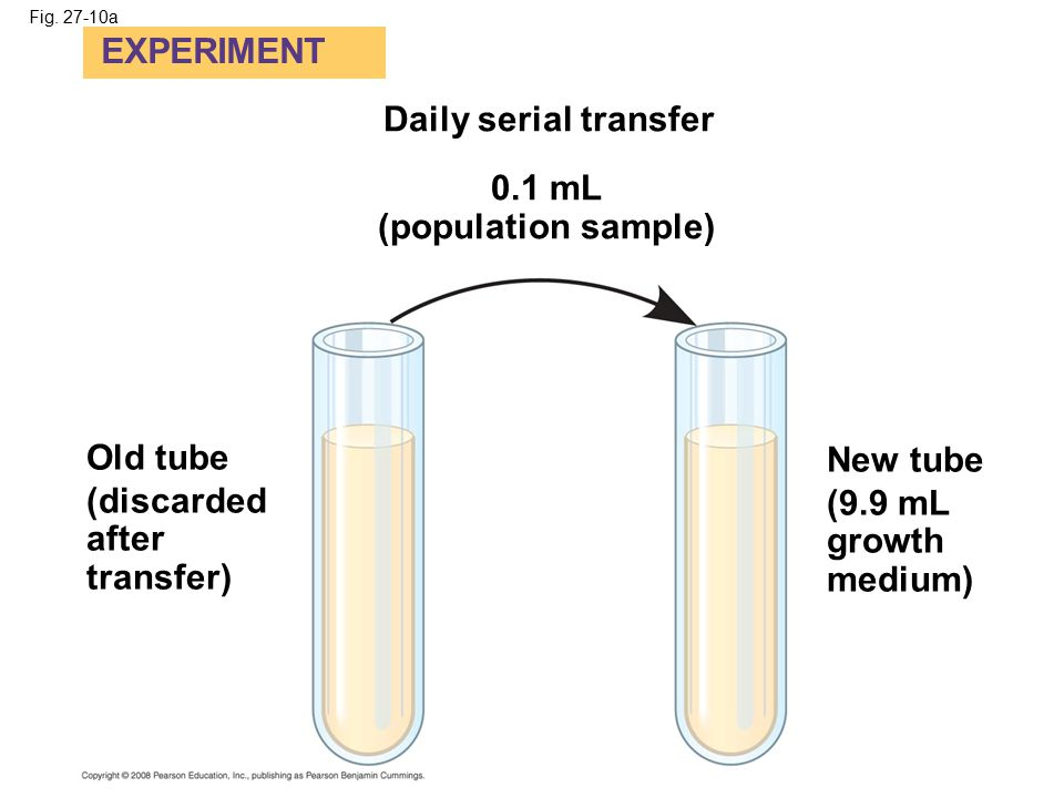 Fig. 27-10a EXPERIMENT Daily serial transfer 0.1 mL (population sample) Old tube (discarded after transfer) New tube (9.9 mL growth medium)
