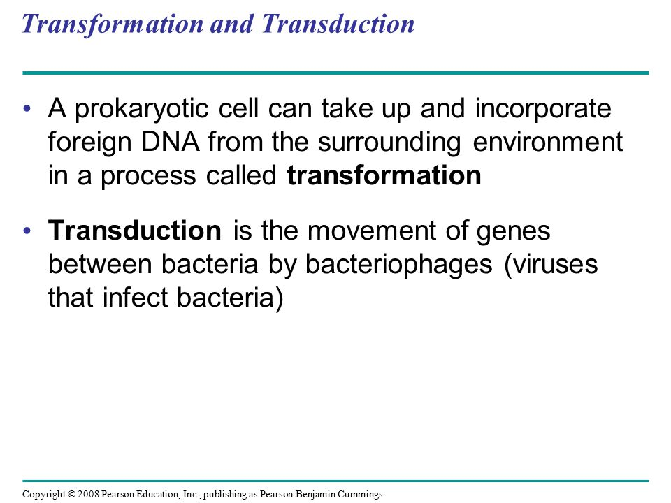 Copyright © 2008 Pearson Education, Inc., publishing as Pearson Benjamin Cummings Transformation and Transduction A prokaryotic cell can take up and i
