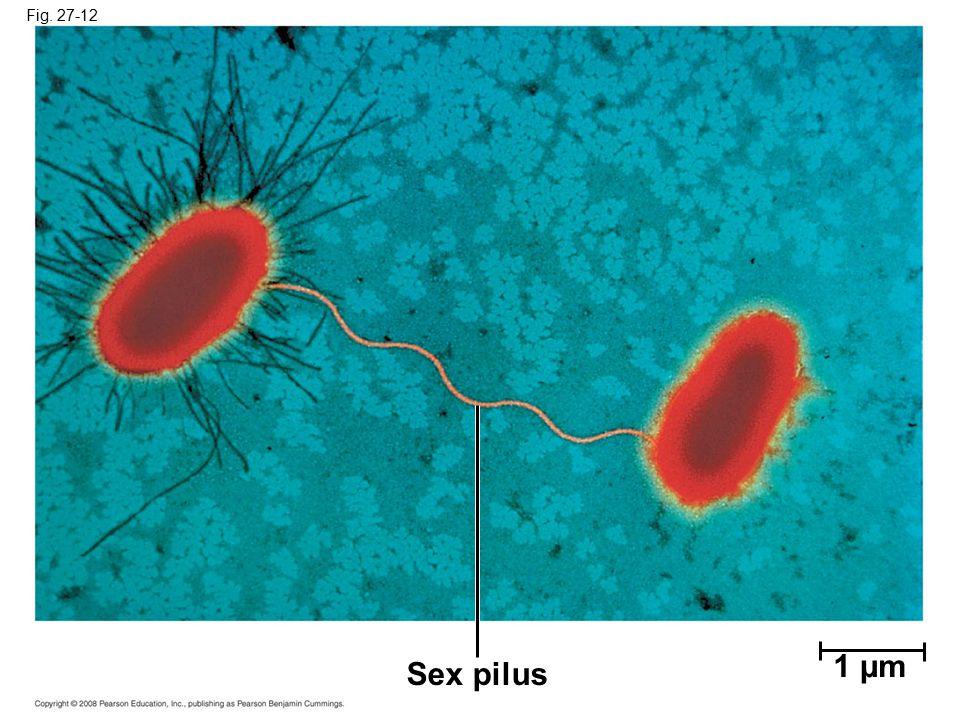Fig. 27-12 Sex pilus 1 µm