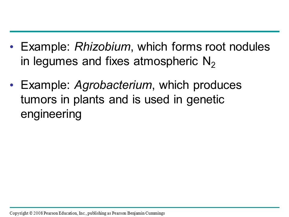 Copyright © 2008 Pearson Education, Inc., publishing as Pearson Benjamin Cummings Example: Rhizobium, which forms root nodules in legumes and fixes at
