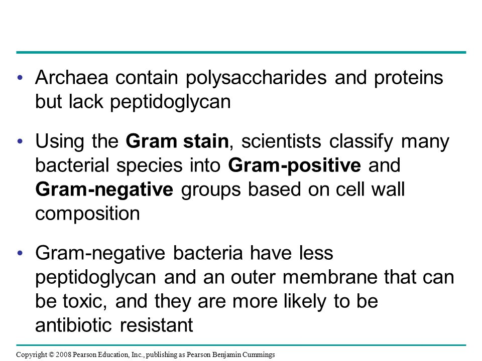Copyright © 2008 Pearson Education, Inc., publishing as Pearson Benjamin Cummings Archaea contain polysaccharides and proteins but lack peptidoglycan