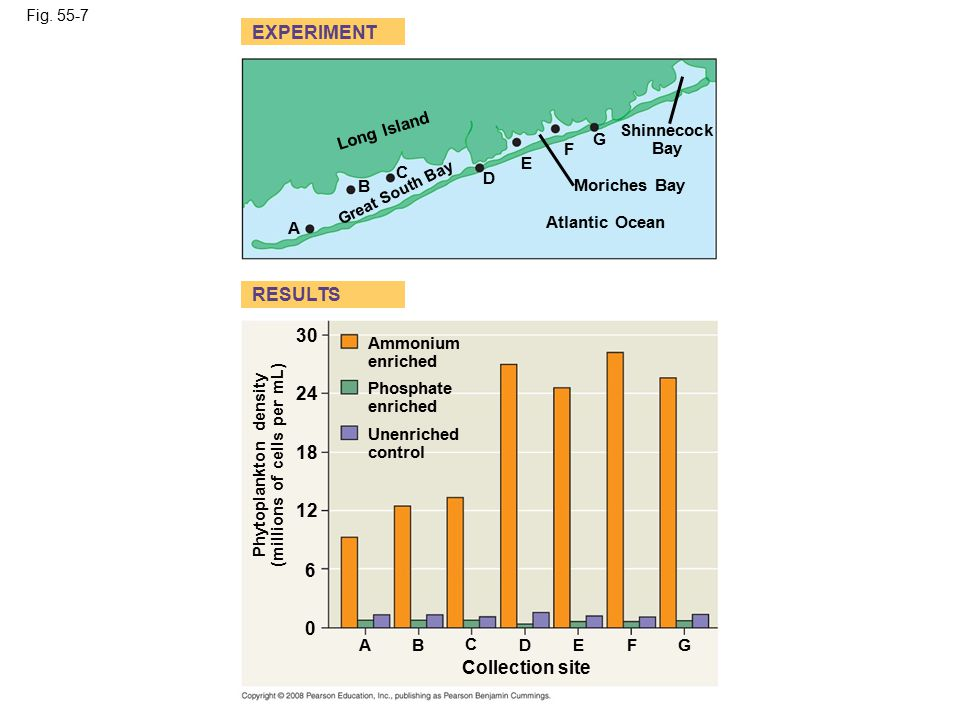 Fig. 55-7 Atlantic Ocean Moriches Bay Shinnecock Bay Long Island Great South Bay A B C D E F G EXPERIMENT Ammonium enriched Phosphate enriched Unenric