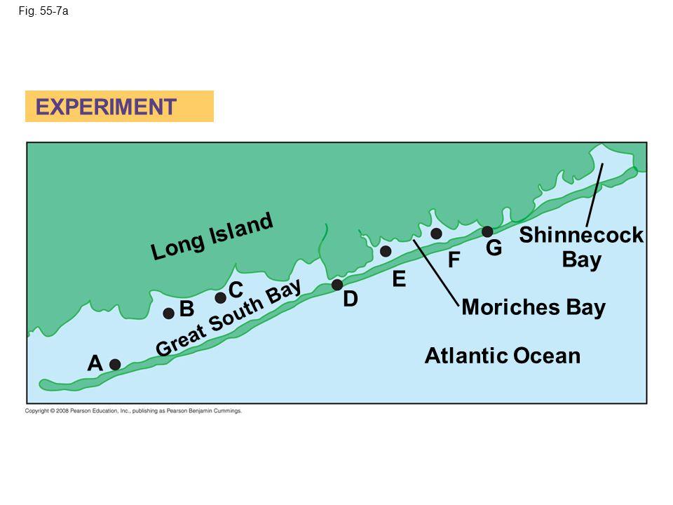 Fig. 55-7a Atlantic Ocean Moriches Bay Shinnecock Bay Long Island Great South Bay A B C D E F G EXPERIMENT