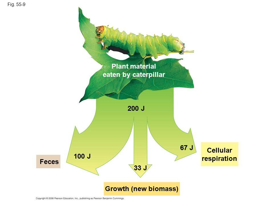 Fig. 55-9 Cellular respiration 100 J Growth (new biomass) Feces 200 J 33 J 67 J Plant material eaten by caterpillar