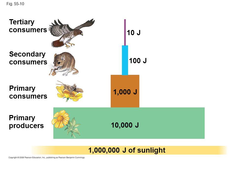 Fig. 55-10 Primary producers 100 J 1,000,000 J of sunlight 10 J 1,000 J 10,000 J Primary consumers Secondary consumers Tertiary consumers