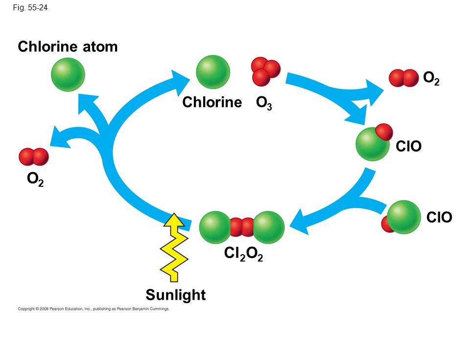 Fig. 55-24 O2O2 Sunlight Cl 2 O 2 Chlorine Chlorine atom O3O3 O2O2 ClO