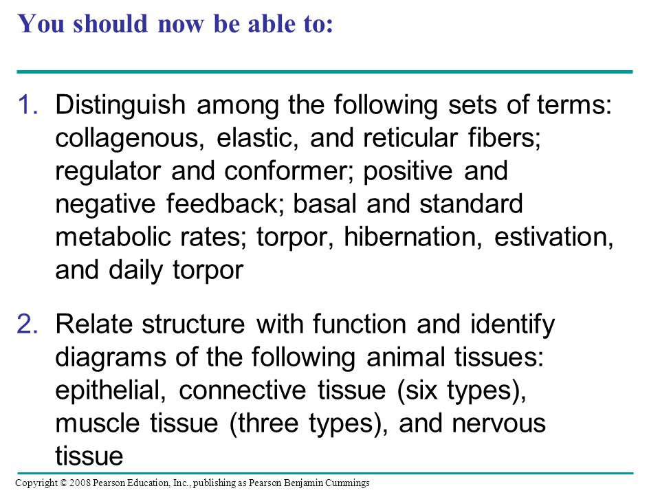 You should now be able to: 1.Distinguish among the following sets of terms: collagenous, elastic, and reticular fibers; regulator and conformer; positive and negative feedback; basal and standard metabolic rates; torpor, hibernation, estivation, and daily torpor 2.Relate structure with function and identify diagrams of the following animal tissues: epithelial, connective tissue (six types), muscle tissue (three types), and nervous tissue Copyright © 2008 Pearson Education, Inc., publishing as Pearson Benjamin Cummings