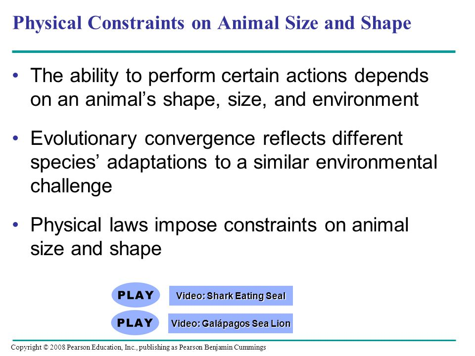 Physical Constraints on Animal Size and Shape The ability to perform certain actions depends on an animal's shape, size, and environment Evolutionary convergence reflects different species' adaptations to a similar environmental challenge Physical laws impose constraints on animal size and shape Copyright © 2008 Pearson Education, Inc., publishing as Pearson Benjamin Cummings Video: Galápagos Sea Lion Video: Galápagos Sea Lion Video: Shark Eating Seal Video: Shark Eating Seal