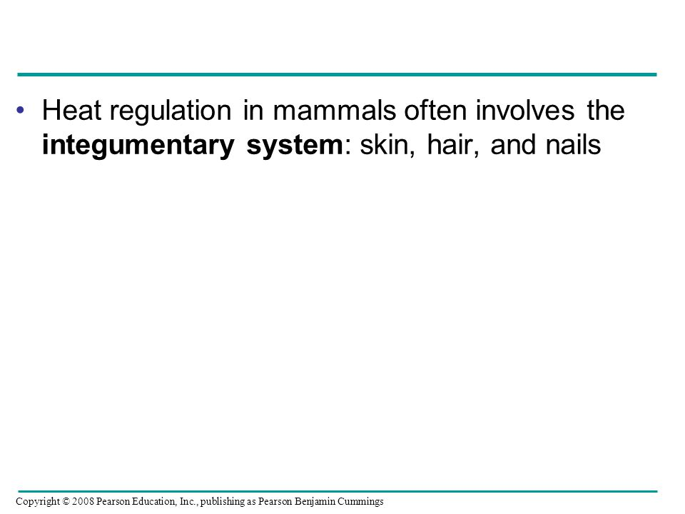 Heat regulation in mammals often involves the integumentary system: skin, hair, and nails Copyright © 2008 Pearson Education, Inc., publishing as Pearson Benjamin Cummings