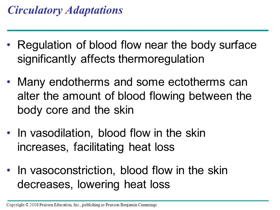 Regulation of blood flow near the body surface significantly affects thermoregulation Many endotherms and some ectotherms can alter the amount of blood flowing between the body core and the skin In vasodilation, blood flow in the skin increases, facilitating heat loss In vasoconstriction, blood flow in the skin decreases, lowering heat loss Circulatory Adaptations Copyright © 2008 Pearson Education, Inc., publishing as Pearson Benjamin Cummings