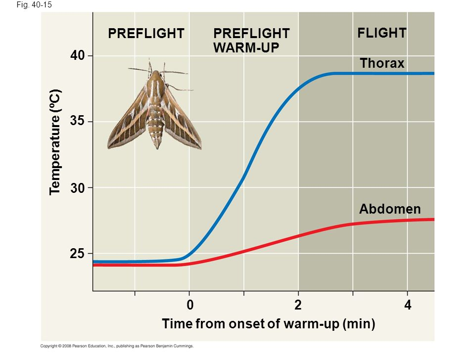 Fig. 40-15 PREFLIGHT WARM-UP FLIGHT Thorax Abdomen Time from onset of warm-up (min) Temperature (ºC) 024 25 30 35 40
