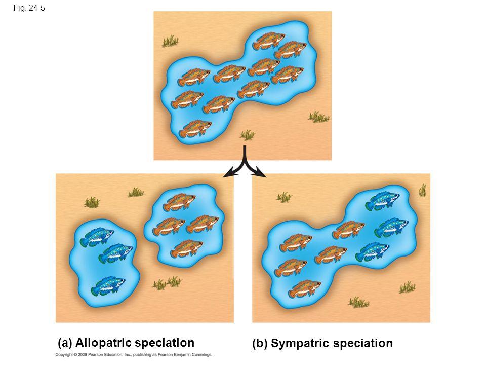 Fig. 24-5 (a) Allopatric speciation (b) Sympatric speciation