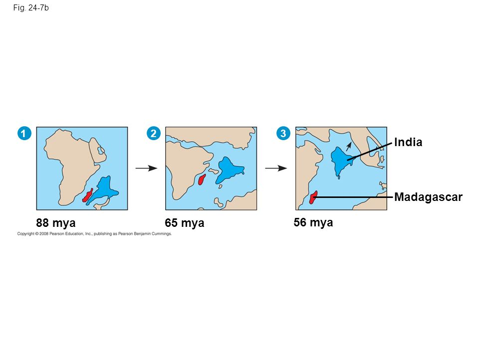 Fig. 24-7b India 88 mya65 mya 56 mya Madagascar 12 3