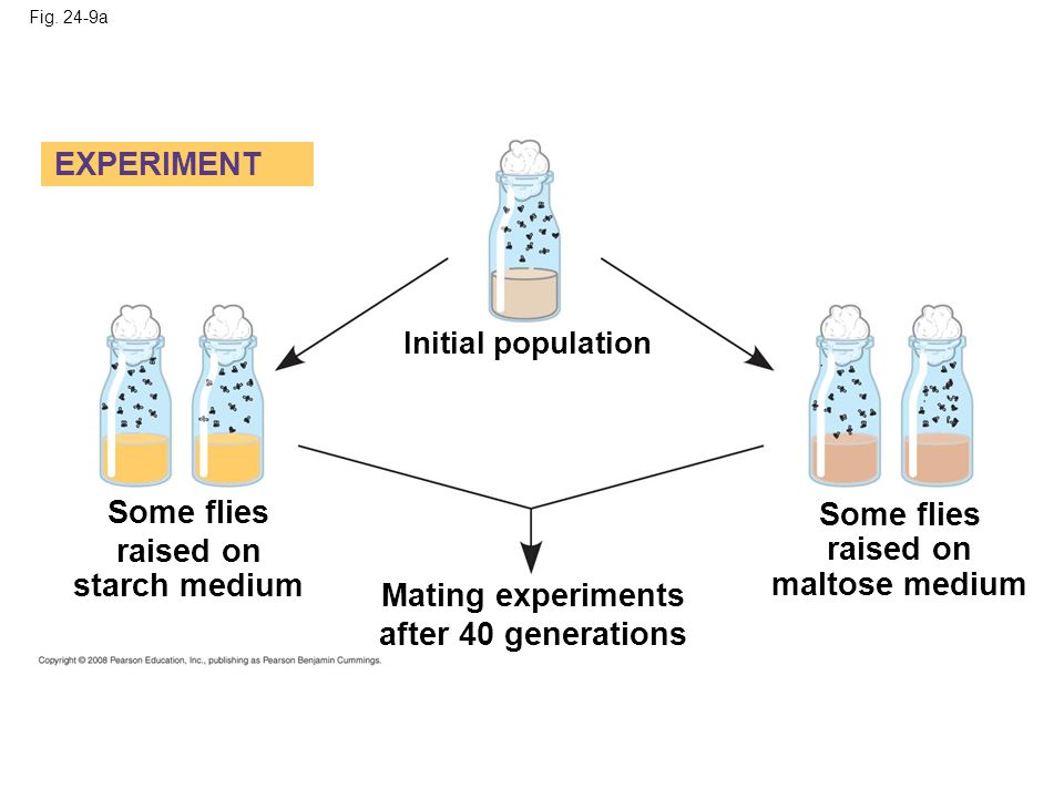 Fig. 24-9a EXPERIMENT Initial population Some flies raised on starch medium Mating experiments after 40 generations Some flies raised on maltose mediu