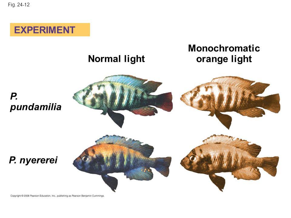 Fig. 24-12 EXPERIMENT Normal light Monochromatic orange light P. pundamilia P. nyererei