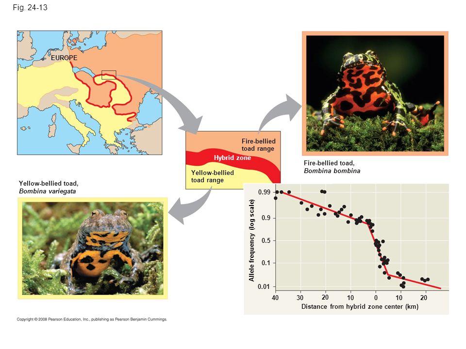 Fig. 24-13 EUROPE Fire-bellied toad range Hybrid zone Yellow-bellied toad range Yellow-bellied toad, Bombina variegata Fire-bellied toad, Bombina bomb